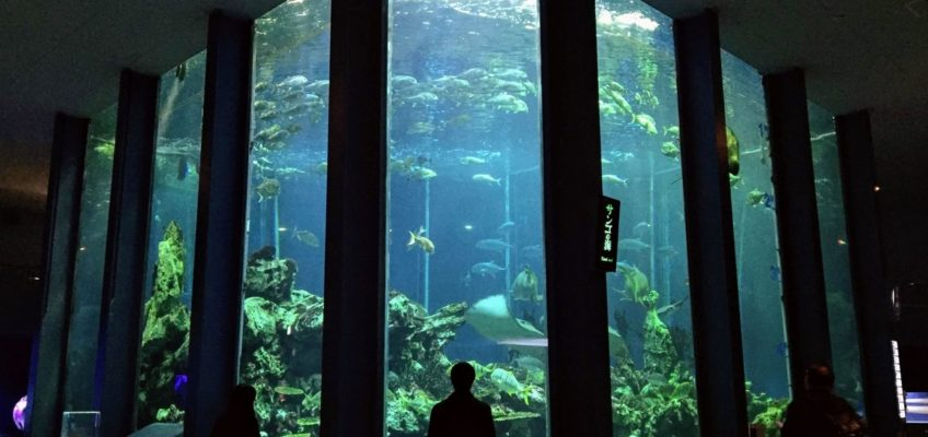 海のめぐみを守るために、科学の目線から海洋を知れる総合博物館に行ってきた【東海大学海洋科学博物館の見どころ、写真25枚】