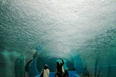 海中散歩で生物を見上げられる水族館に行ってきた動画+写真28枚【石川県七尾市能登島・のとじま水族館】